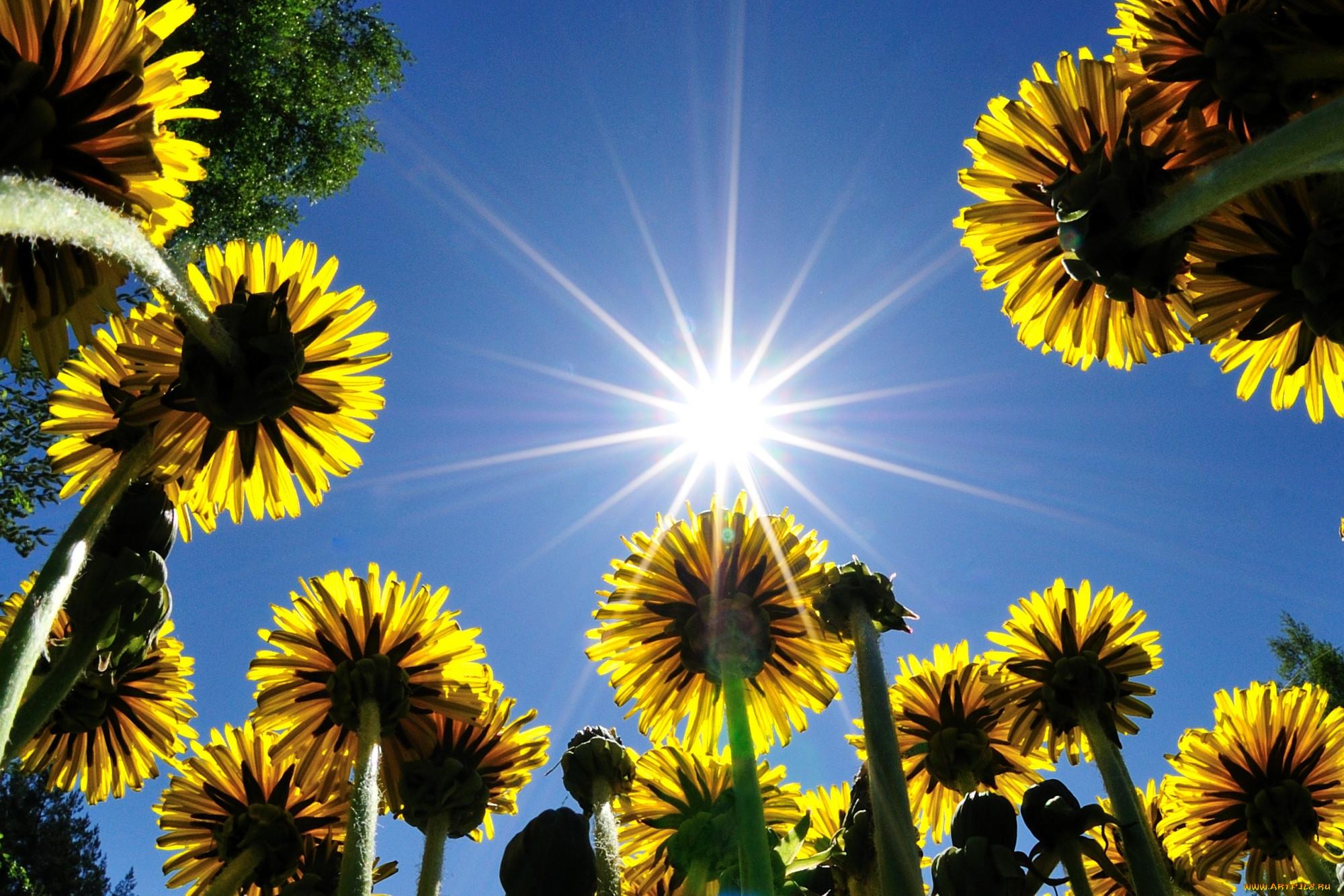 фото лето цветы и солнце выставочных собак